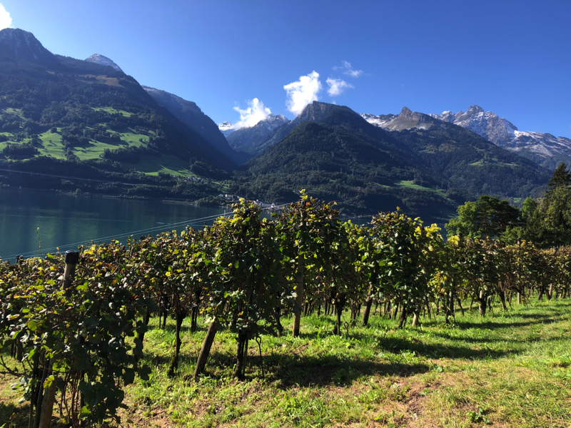 Along the Walensee